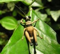 Bug in Amazon rainforest - August 2007